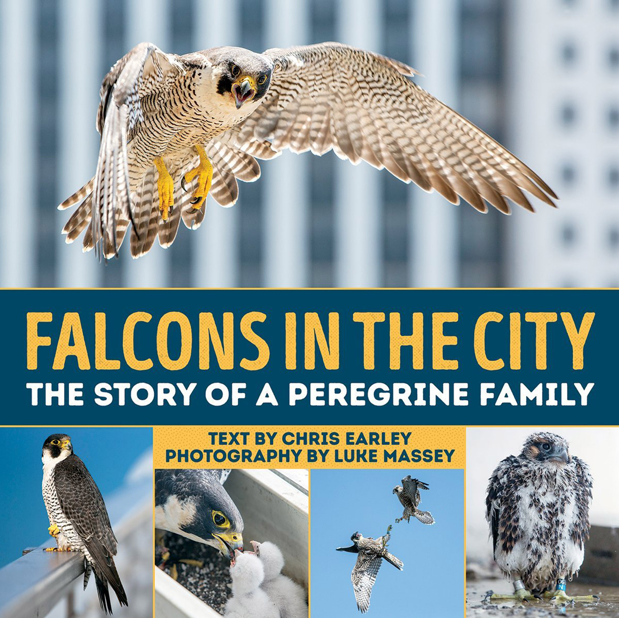 """Cover of """"Falcons in the City"""""""